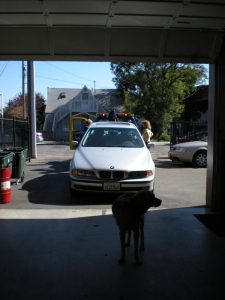 Picture of a dog standing in front of a BMW that's getting a tow